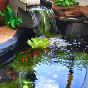 عکس - یک حوضچه درون باغچه یا تراس خانه تان بسازید.