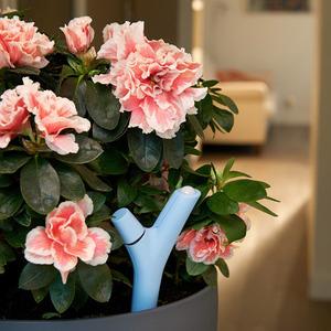 عکس - مراقبت از گیاهان با Flower Power