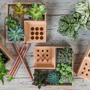 عکس - باغچه ای کوچک روی میزکارخود داشته باشید.