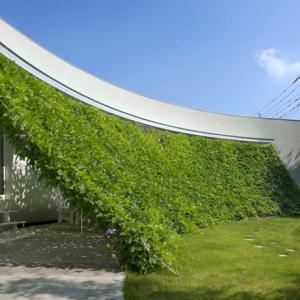 عکس - سایه بان سبز یک خانه ژاپنی