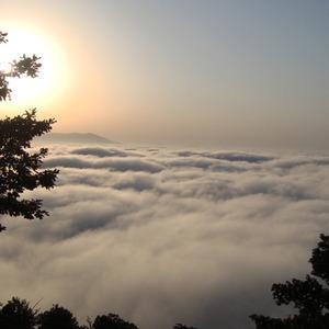 عکس - جنگل ابر