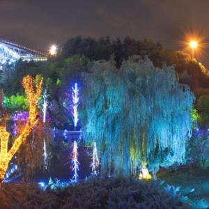 تصویر - نورپردازی پنج هکتار از درختان پیرامون پل طبیعت - معماری