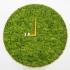 عکس - ساعت سبز خزه ای