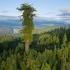 عکس - شگفت انگیزترین درختان جهان