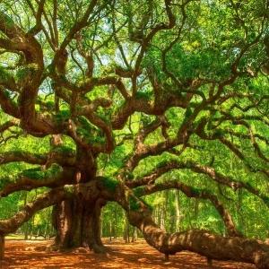 تصویر - شگفت انگیزترین درختان جهان - معماری
