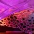 عکس - اینستالیشن معماری سابین در سهسالانه طراحی موزه اسمیتسونیان