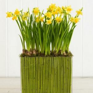 عکس - ایده های بهاری ،تزئین گلدان های شیشه ای