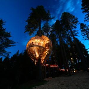 تصویر - رستوران درختی زرد ، اثر تیم طراحی Pacific Environments , نیوزلند - معماری