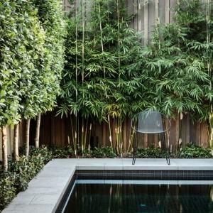 عکس - 7 روش برای داشتن یک حیاط خصوصی تر