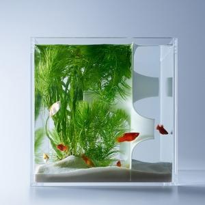 تصویر - آکواریوم های haruka misawa ، خلاقیت در طراحی محیط زیست آبزیان - معماری