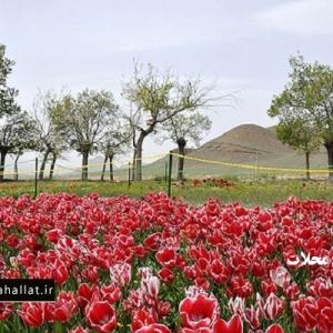 تصویر - پیش به سوی سفرهای نوروزی - محلات ، هلند ایران - معماری