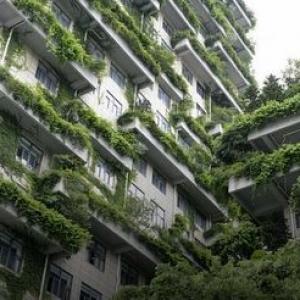 عکس - رونمایی اولین شهر-جنگل جهان در چین