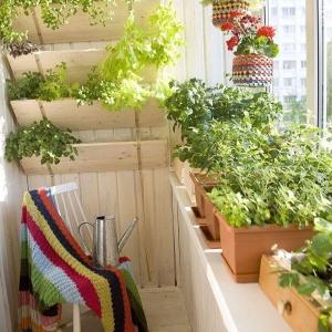 تصویر - گل و گیاه در تراس خانه های ایرانی - معماری