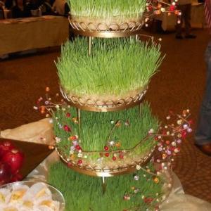 عکس - انواع مدلهای خلاقانه سبزه هفت سین