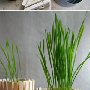 تصویر - انواع مدلهای خلاقانه سبزه هفت سین - معماری