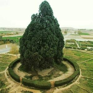 تصویر - سرو ابرکوه , پیرترین موجود زنده دنیا - معماری