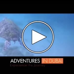 عکس - ماجراجویی در دوبی , لذت غواصی در میان صخرهای مرجانی