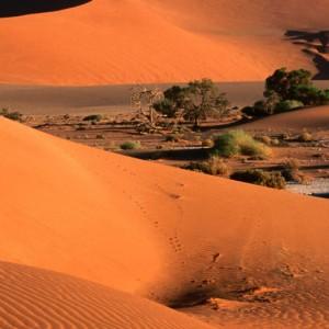 تصویر - کویر ساحلی نامیب (Namib Desert) ، خواهر دوقلوی درک در آفریقا - معماری