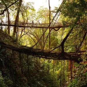 عکس - پل دیدنی Mawsynram (پلی از ریشه درختان) ، هندوستان