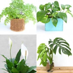 عکس - معرفی ۱۲ گیاه آپارتمانی که هوا را تصفیه می کنند.