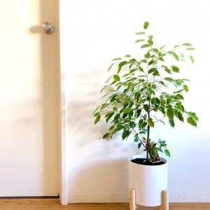 تصویر - معرفی ۱۲ گیاه آپارتمانی که هوا را تصفیه می کنند. - معماری