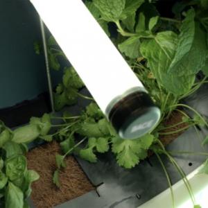 تصویر - پرورش سبزیجات در آشپزخانه به شیوه ای مدرن - معماری
