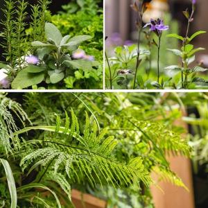 تصویر - طراحی باغ مینیاتوری زیبا در یک حیاط کوچک  - معماری