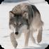 عکس - چگونه از حمله گرگ نجات پیدا کنیم؟