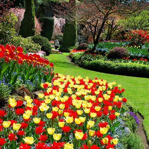 عکس - رویایی ترین باغ گل طبیعی دنیا